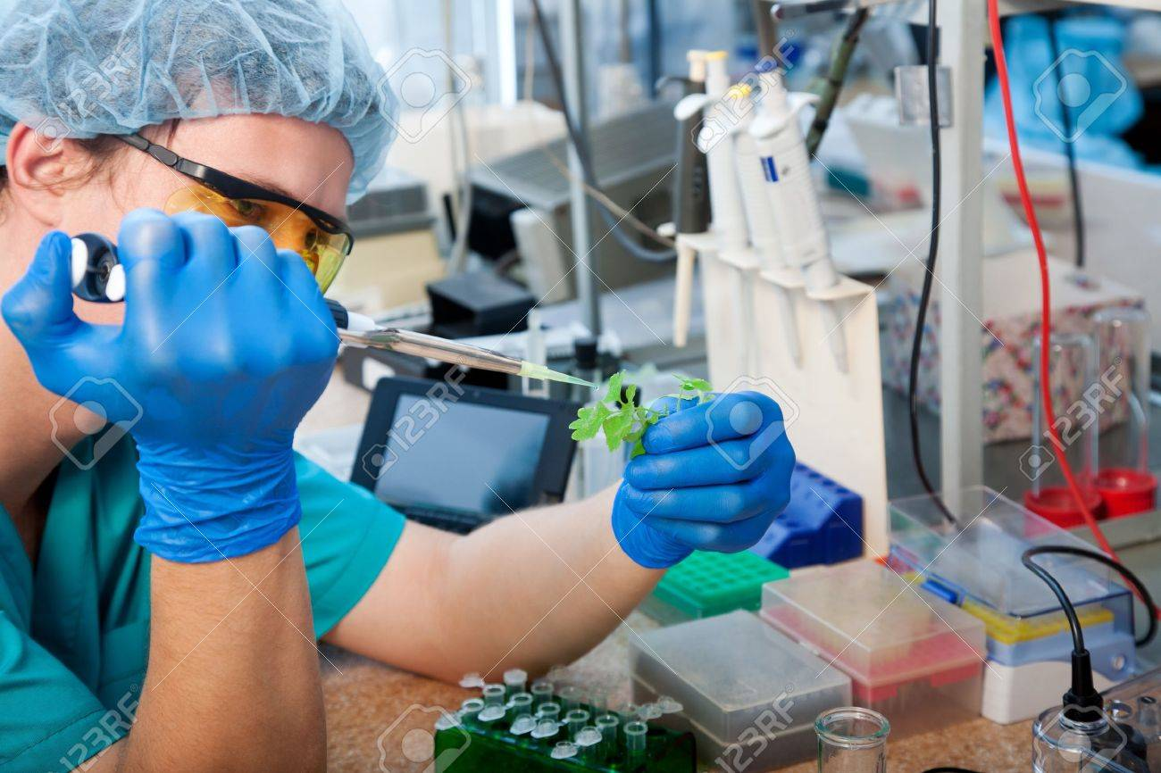 scientist with green plant in modern laboratory - 12539276