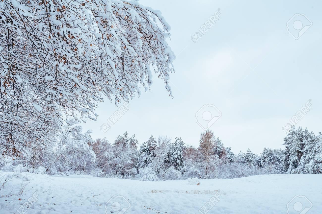 Neige Route Recouverte De Foret Paysage D Hiver Route D Hiver Froid Et Neigeux De Coniferes Bleu Ciel Et Gris Chine Noel Et Nouvel An Arbre Copiez