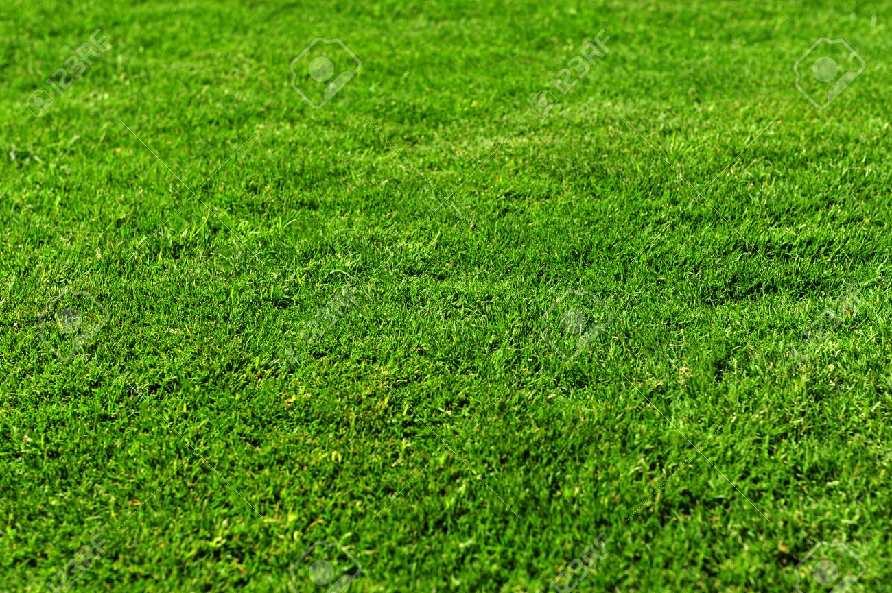 Green Grass Texture For Wallpaper Background Nature Stock Photo Picture And Royalty Free Image Image 96127328