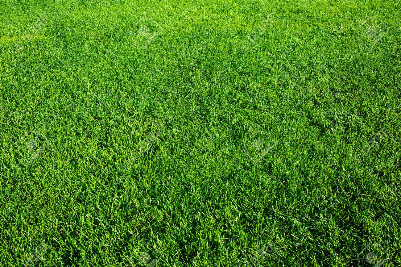 Green grass background texture. Element of design. - 155651397