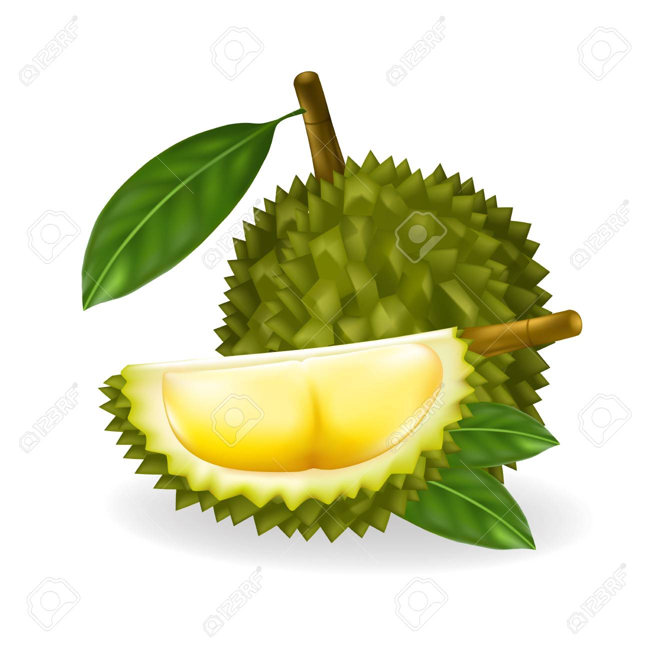 king of fruits durian isolated on white background vector illustration royalty free cliparts vectors and stock illustration image 101269864 king of fruits durian isolated on white background vector illustration