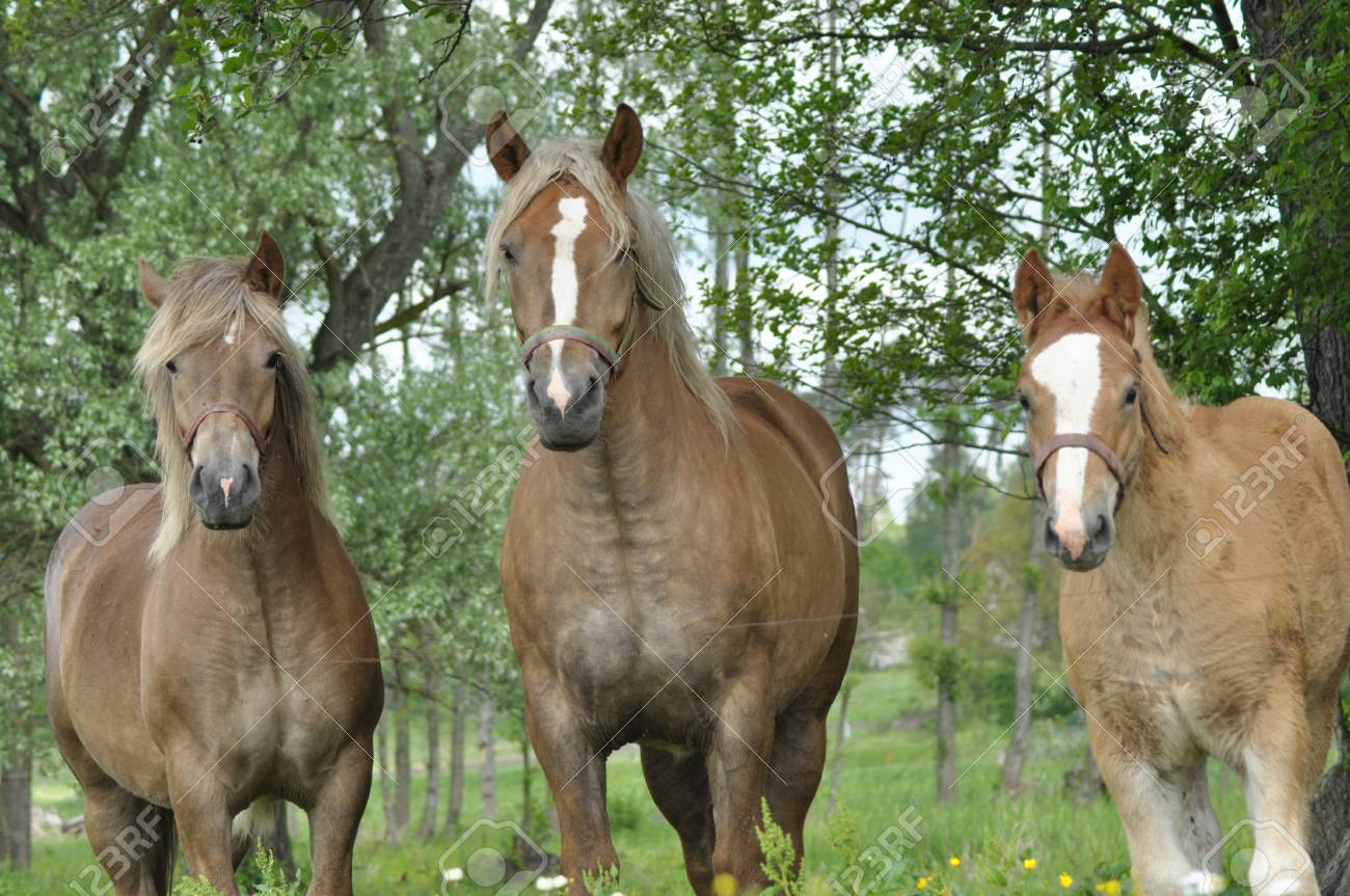 Workhorse  Grazing in the pasture  Meadow in the valley of the