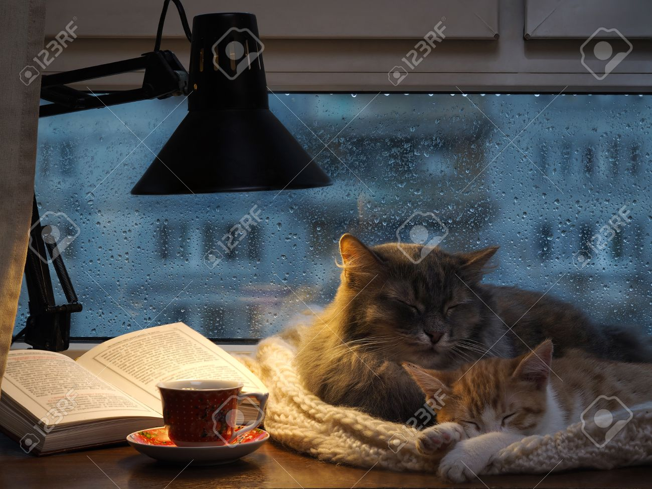 Cats in the window. Outside, rain, water drops on the glass. Twilight, included a desk lamp. It should be a cup with a drink - 53951117
