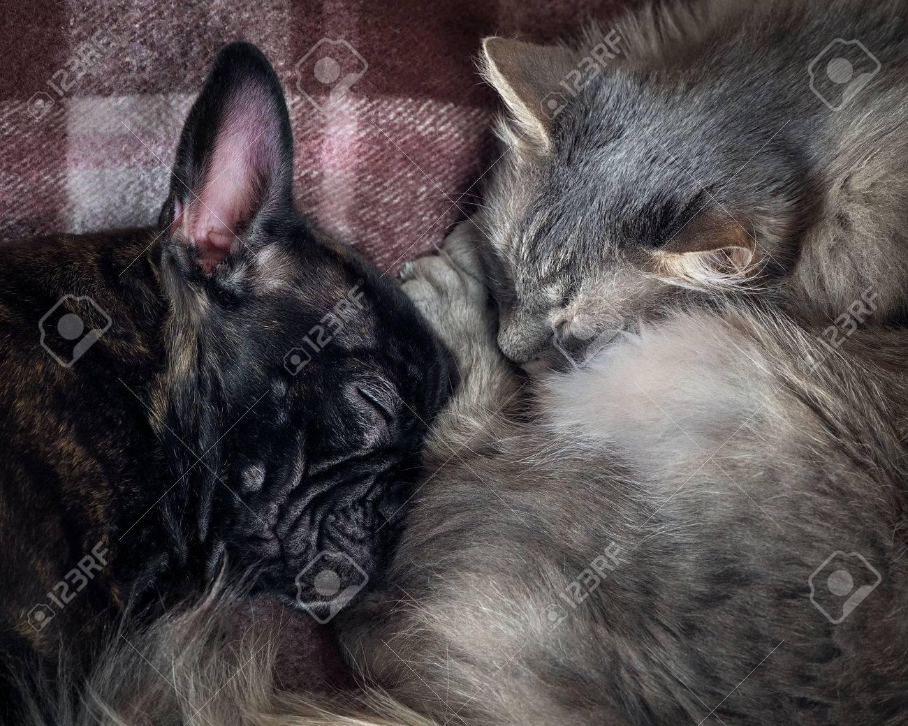 Perro Y Gato Durmiendo Juntos Hocicos Grandes Animales Perro Y