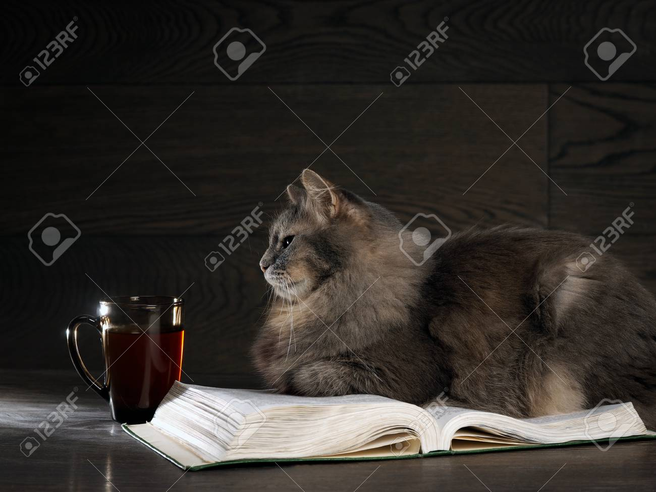 Gray big cat lies on the open book. Nearby stands a cup of tea or coffee - 61252986