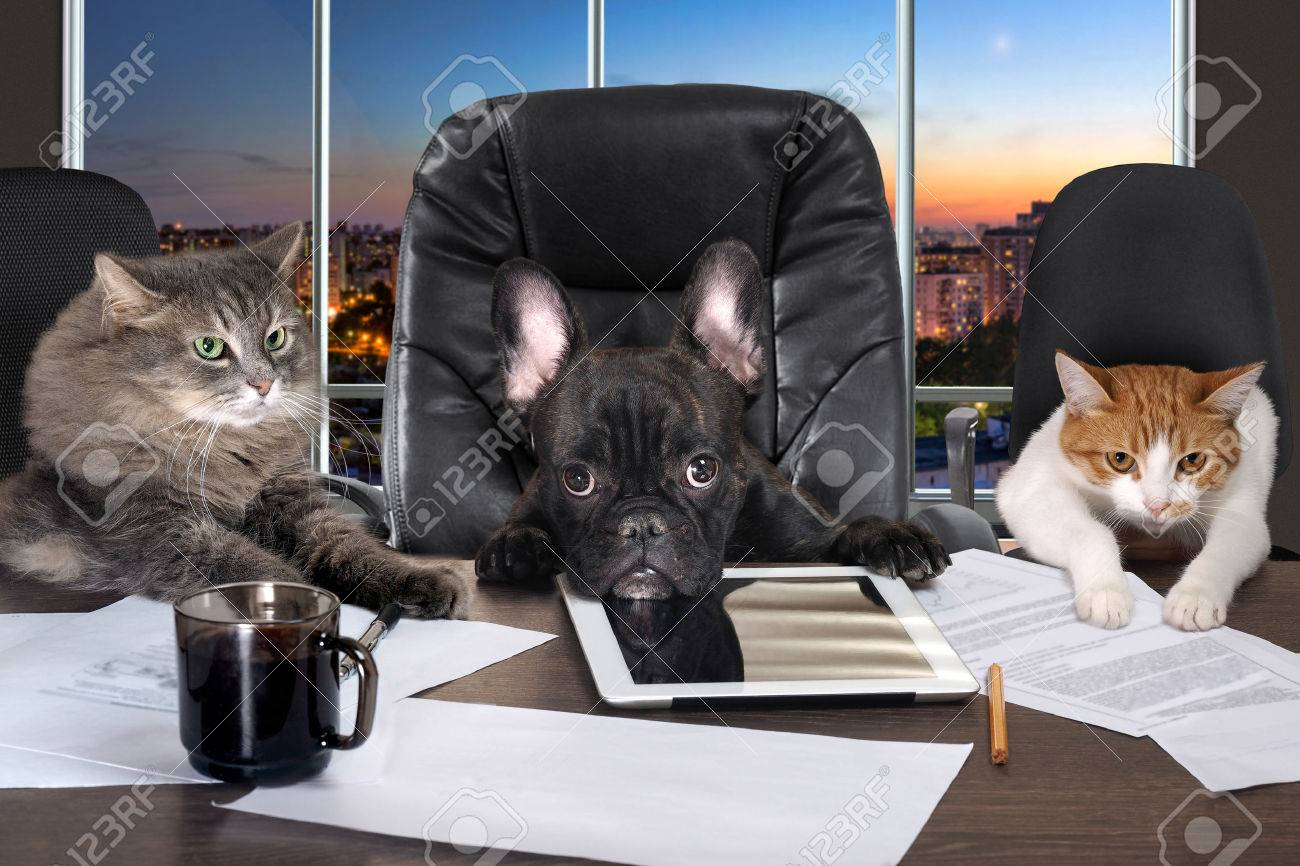 Businessmen in office. Dog head and cat - employees, managers. Different characters personality. The concept of career growth, business, humor, advice, pet products - 61500368