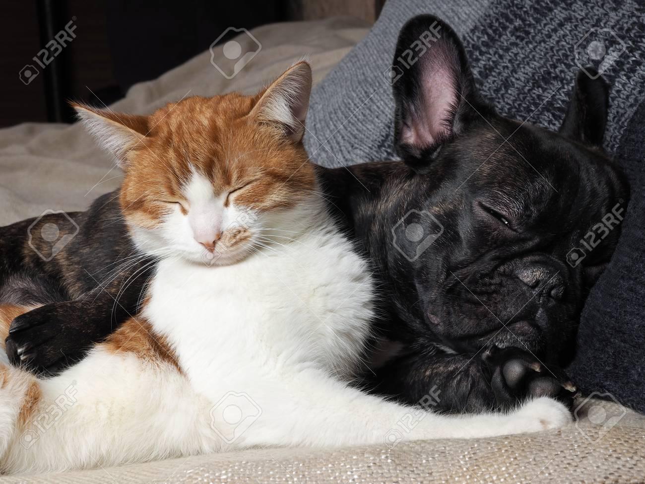 Immagini Stock Simpatico Gatto E Cane Che Dorme Insieme Il Gatto