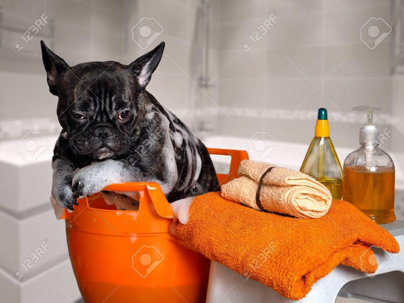archivio fotografico lavaggio cane divertente in un bacino fare un bagno