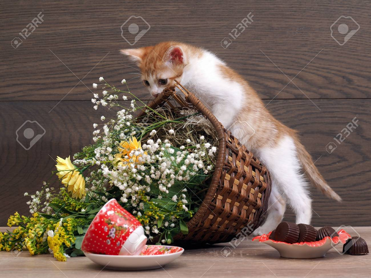 Kitten is playing - drops her basket of flowers. The inverted teacup. Cat made a mess on the table - 67333291