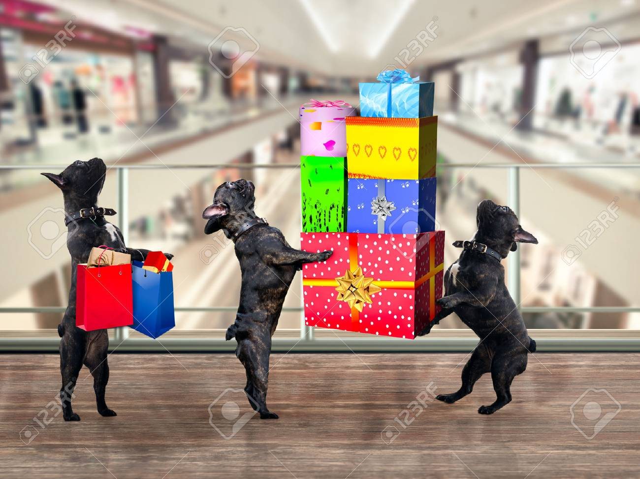 Dogs in the Mall. Are a lot of gifts and purchases - 69081434