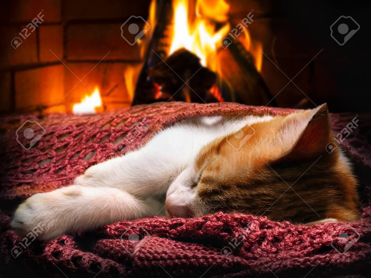 Sleeping kitten, fireplace, fire. Cat-a symbol of comfort, warmth, tranquility in the home - 70536001