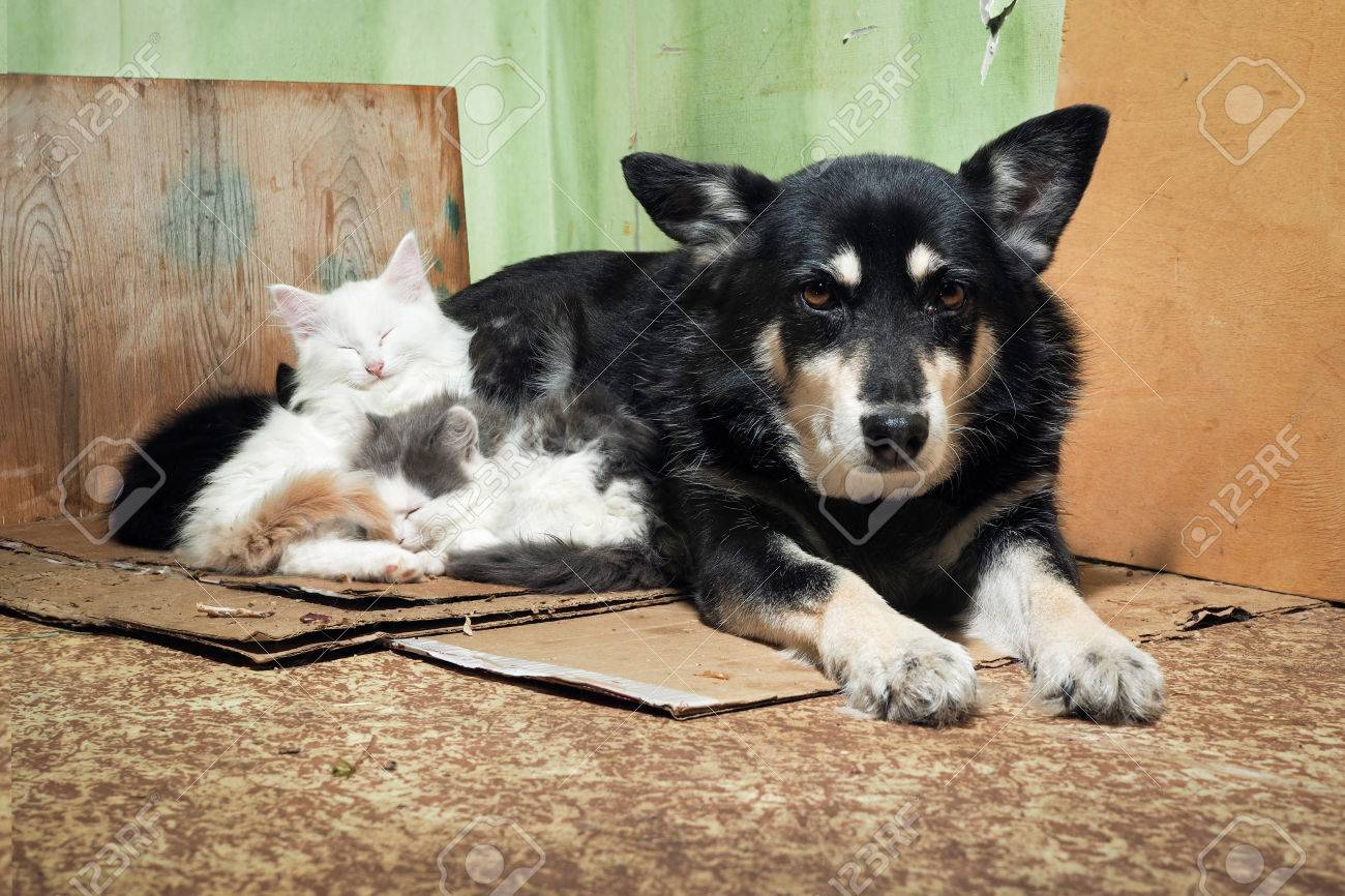 Stray dog and kittens. Dirty corner of the barn, torn cardboard - 73283183