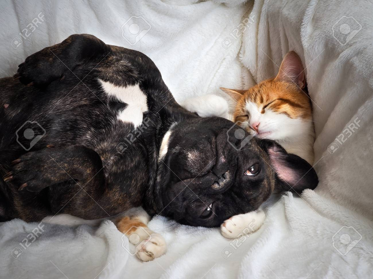 Dog and cat funny lying on a white blanket - 78436476