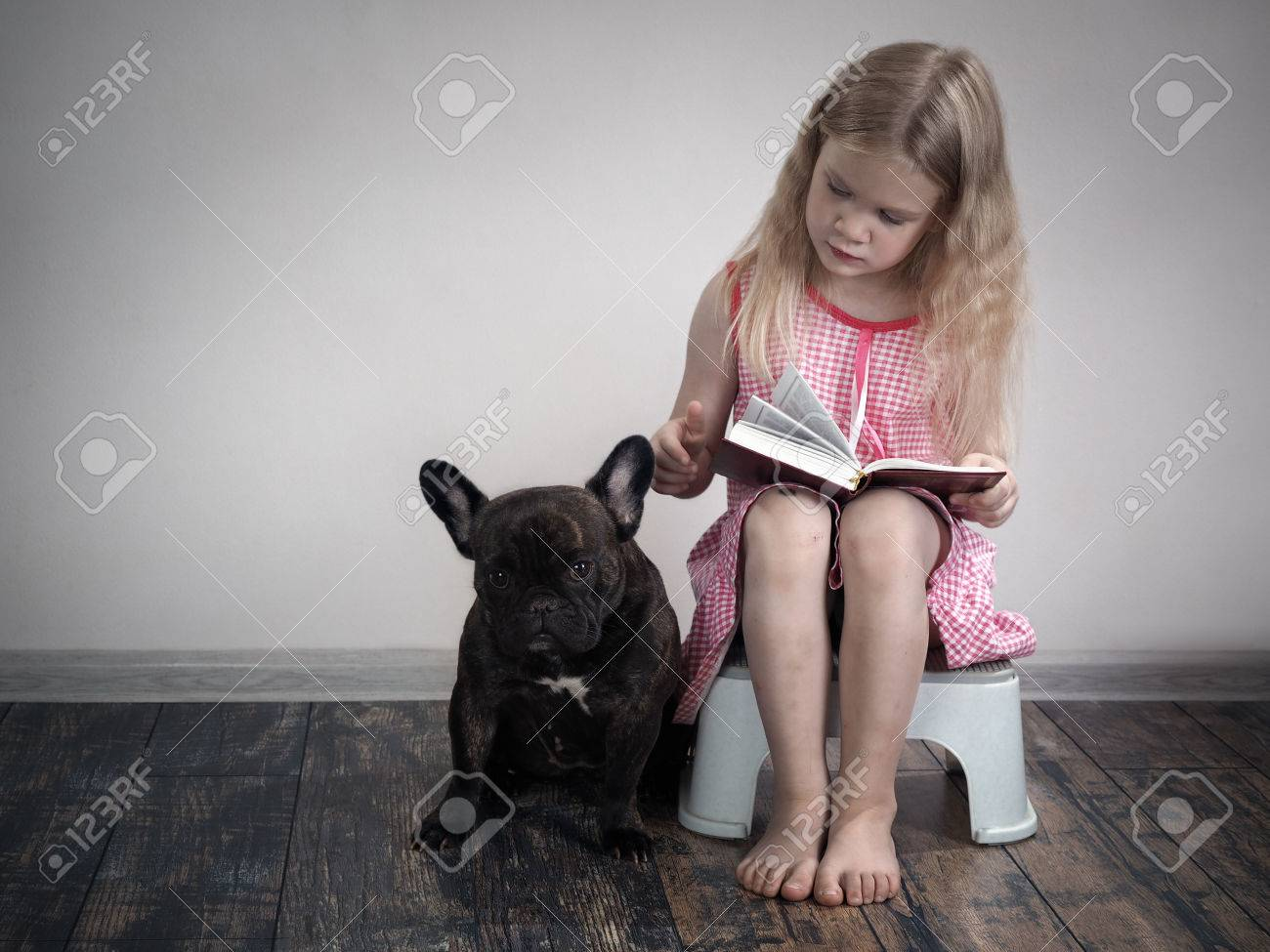 French Bulldog Book