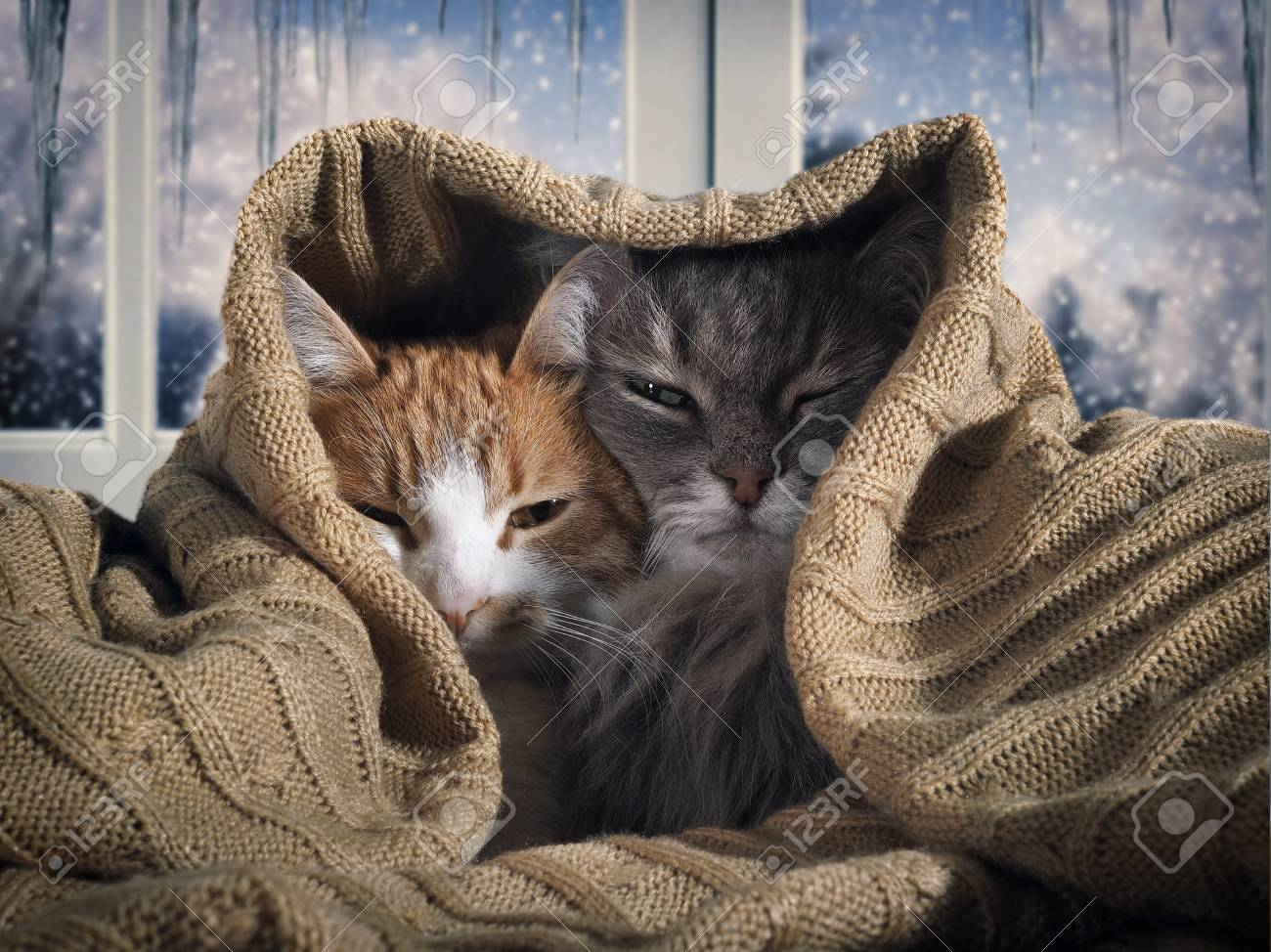 Two cats hide under the blanket. Outside, the winter snow. The concept of home comfort, security, warmth - 88238214