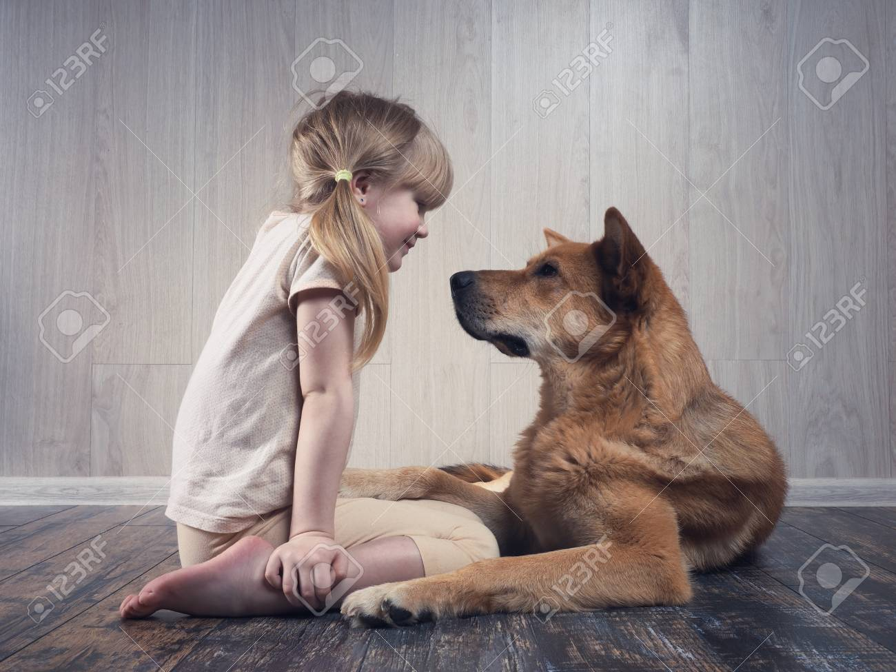 A wonderful little girl and a huge dog communicate with each other. The dog is terrible, but kind. An animal loves a child. - 96147348