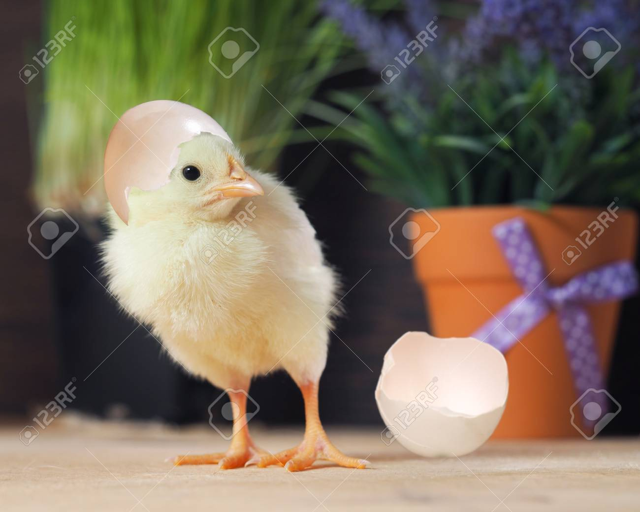 the newly hatched chick and egg shell the background flowers