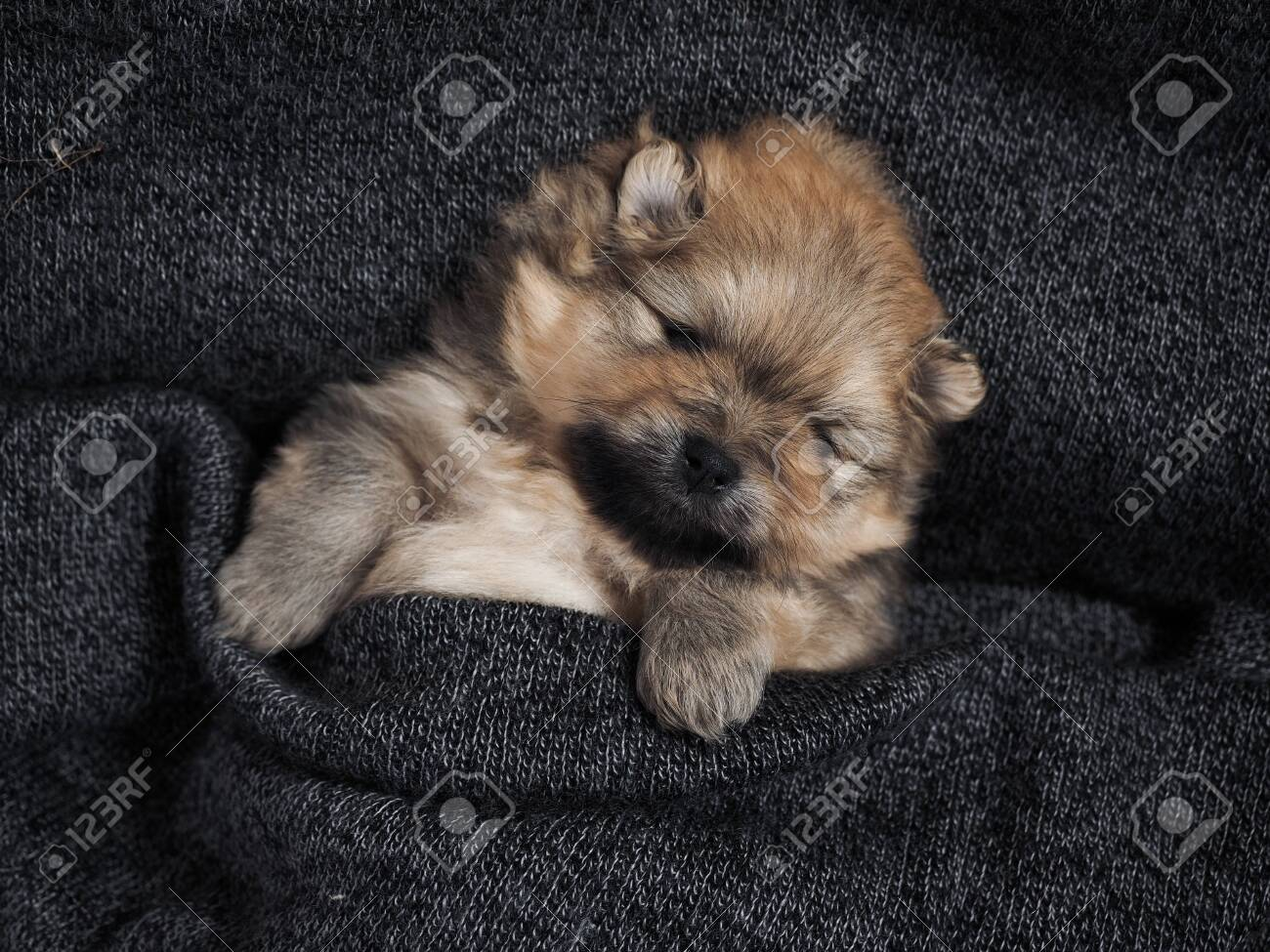 Cute Puppy Sleeping Under A Warm Blanket Cute Dog Stock Photo Picture And Royalty Free Image Image 138428883