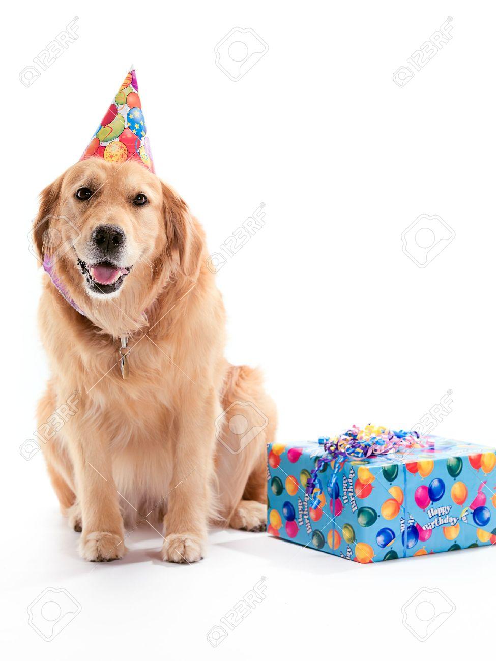Поздравление от собачки своей хозяйке
