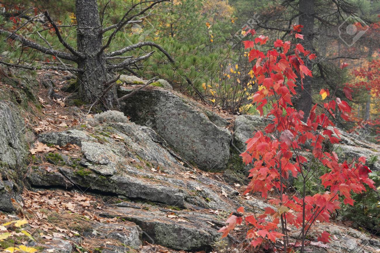 Scenic image of autumn trees and rock Stock Photo - 16978345