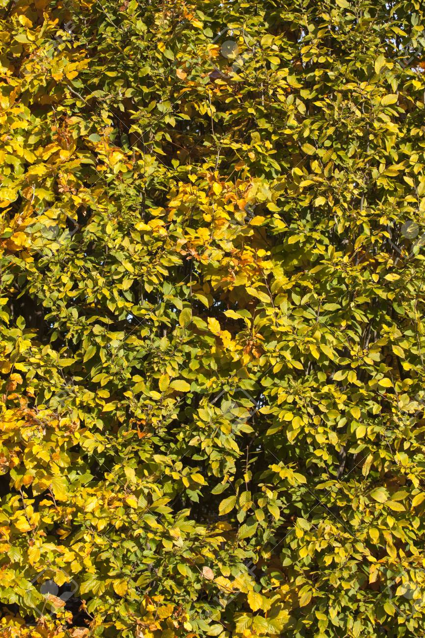 Leaves background isolated on Stock Photo - 16978276