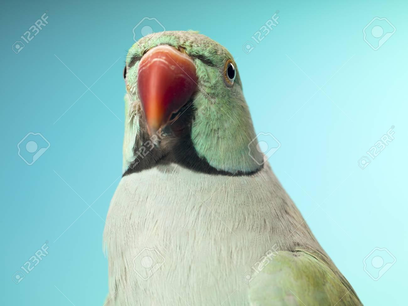 Close-up shot of a parrot. Stock Photo - 16995087
