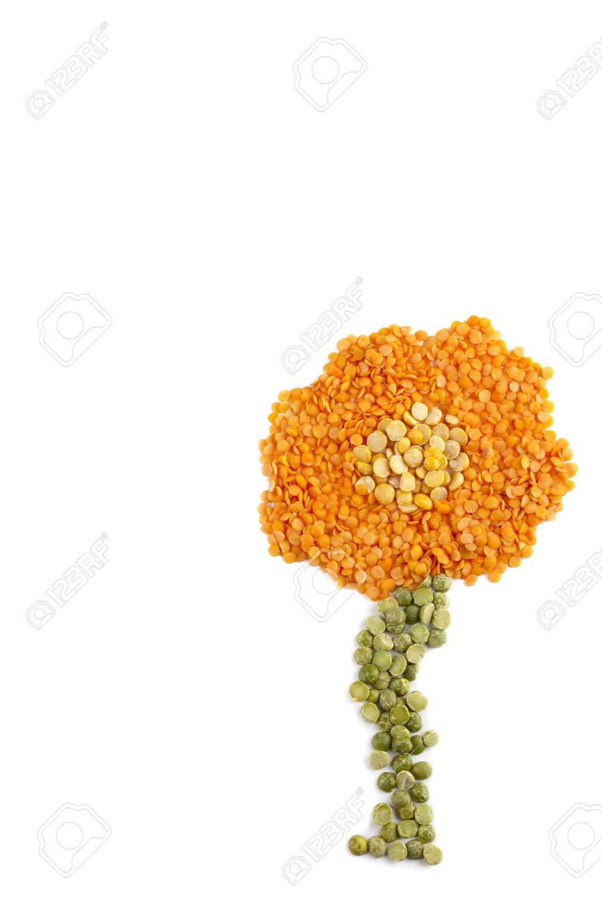 Flower made of beans on white background Stock Photo - 16996250