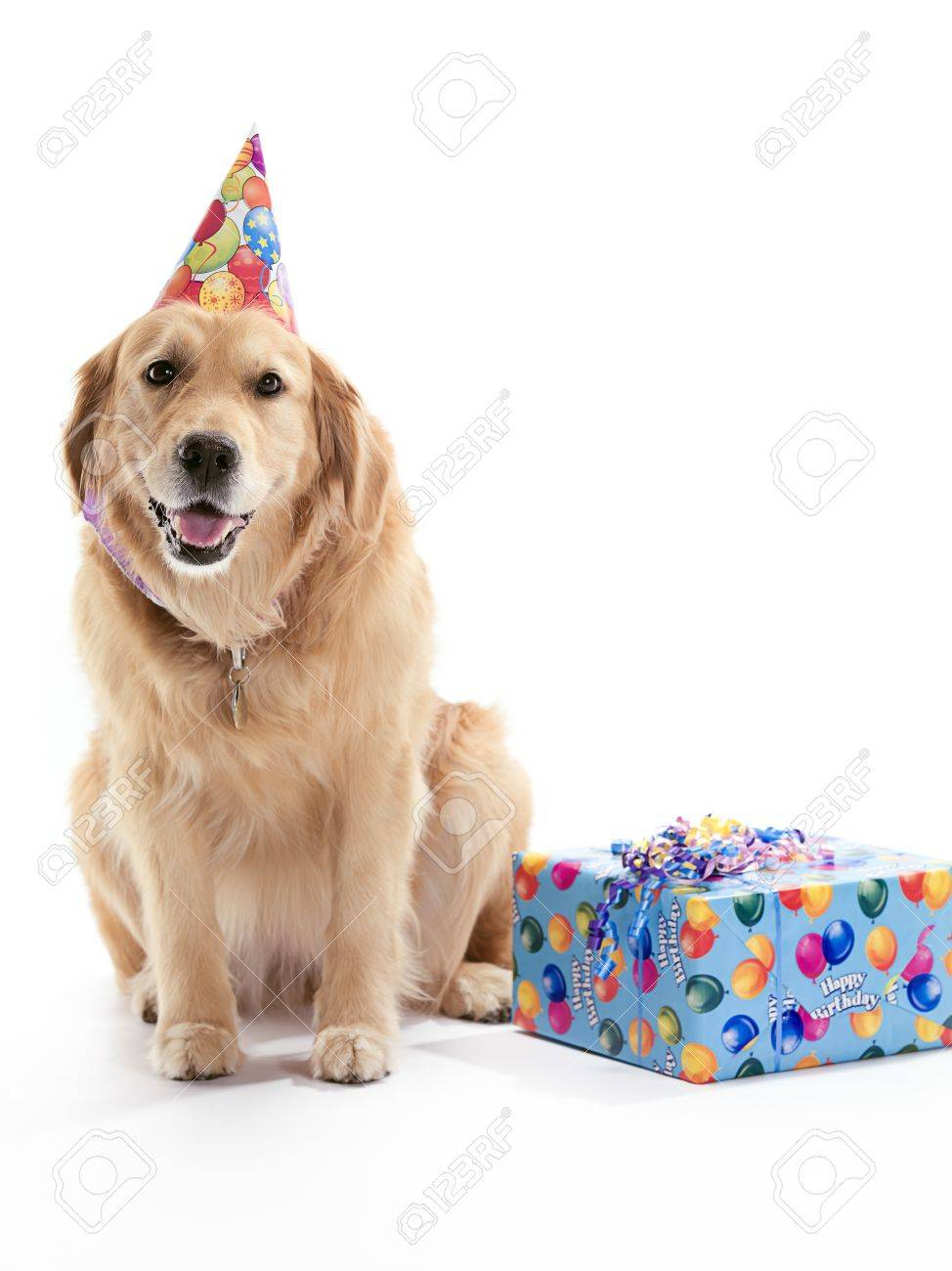 A Golden Retriever Dog Wearing A Birthday Hat On A White Background