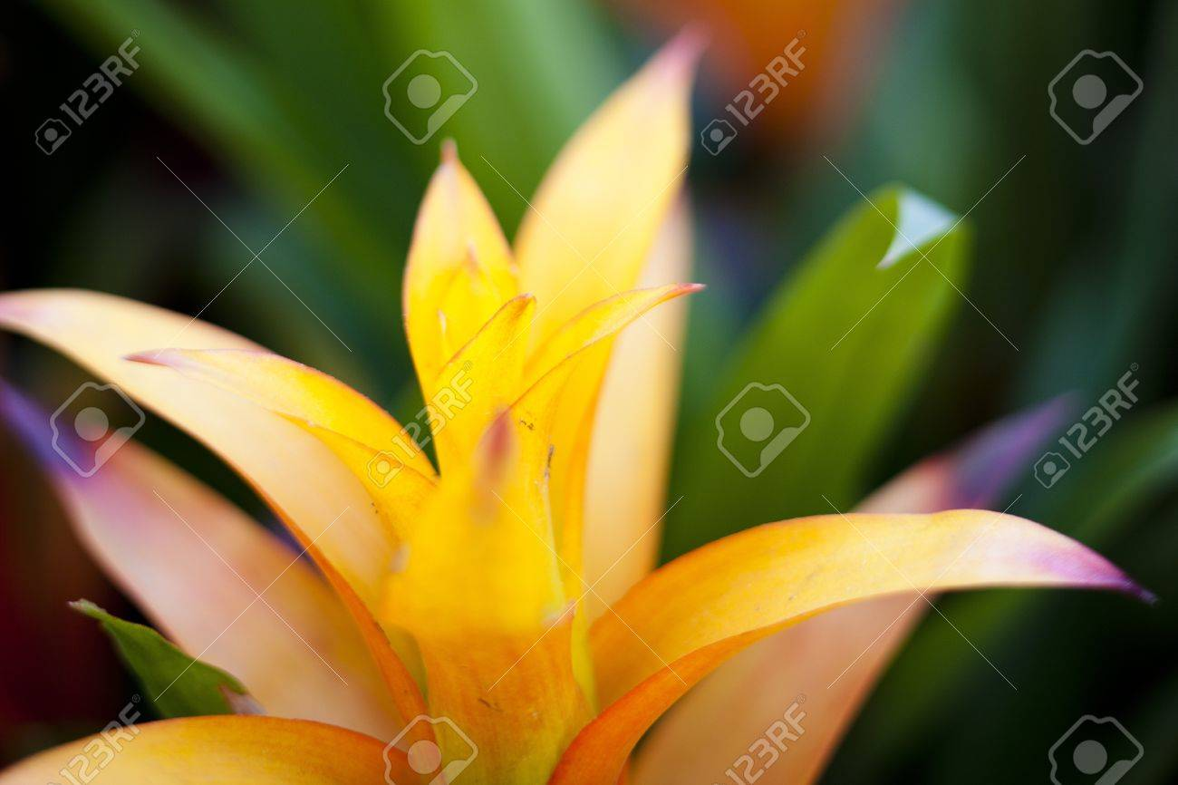 a yellow tropical flower in palm beach, florida. stock photo, Beautiful flower