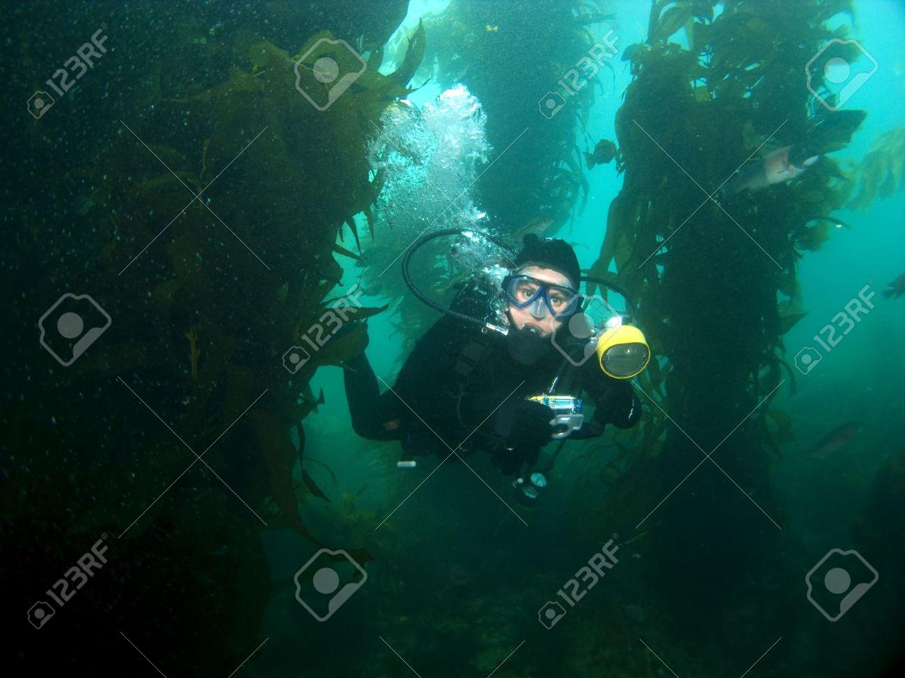 Underwater Photographer swimming through the Kelp in Catalina Stock Photo - 3298622