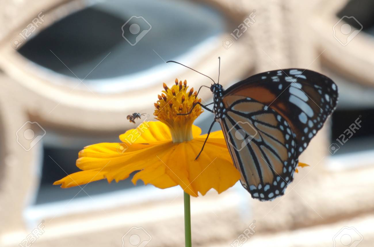 Working bee and butterfly in front of yellow flower Stock Photo - 16302876