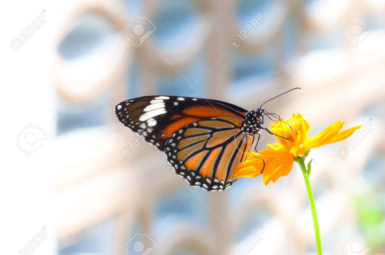 Simple Butterfly on Flower Stock Photo - 16302893