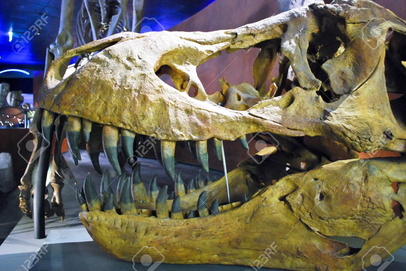 The Tyrannosaurus Rex skull head - 17402709