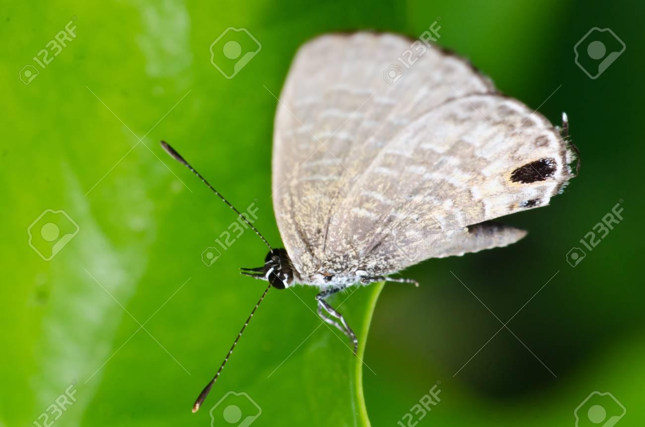 Insect macro photograph Stock Photo - 18209647