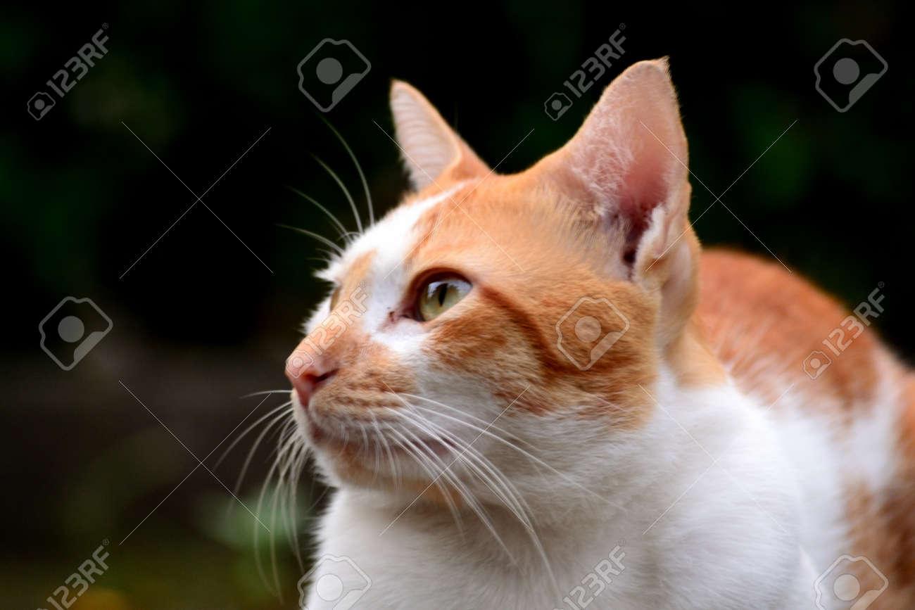 Cute domestic cats the color are orange and white - 155135537
