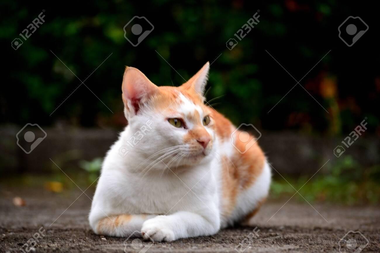 Cute domestic cats the color are orange and white - 154979507