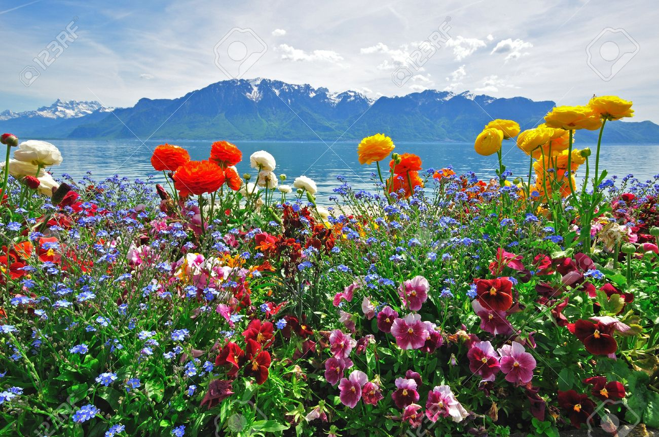 Swiss Landscape: Flowers, Lake, Mountain And Sky Stock Photo   20626462