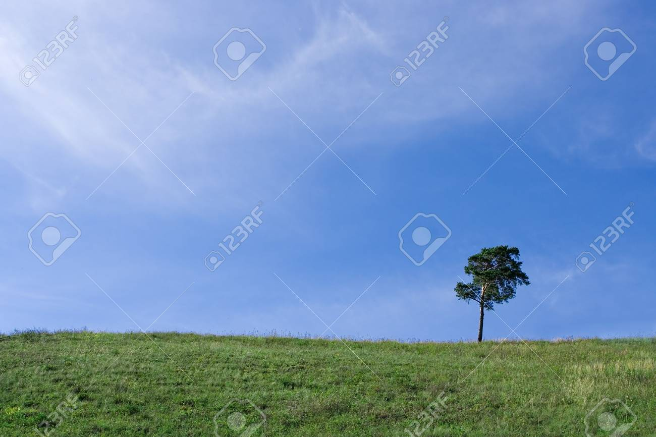 Landscape  tree on the field under blue sky and white clouds Stock Photo - 1888126