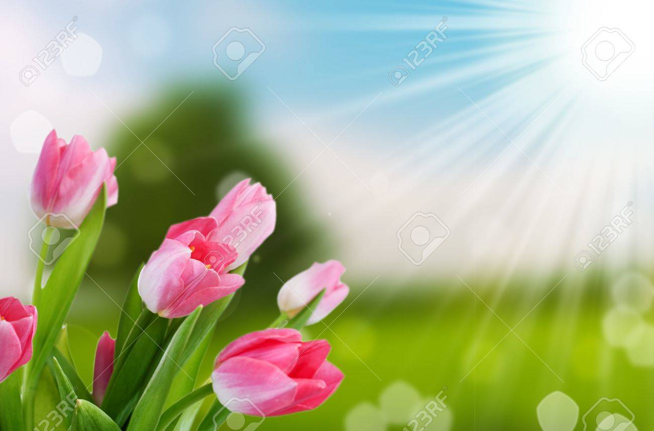 flower and nature spring bokeh background with sun beam - 9758819