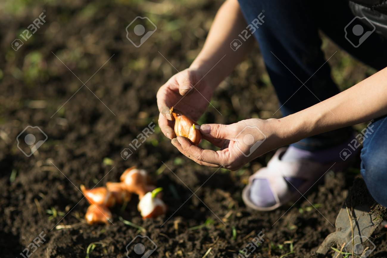 Garden Works. Young Woman Working In The Garden. Healthy Lifestyle ...