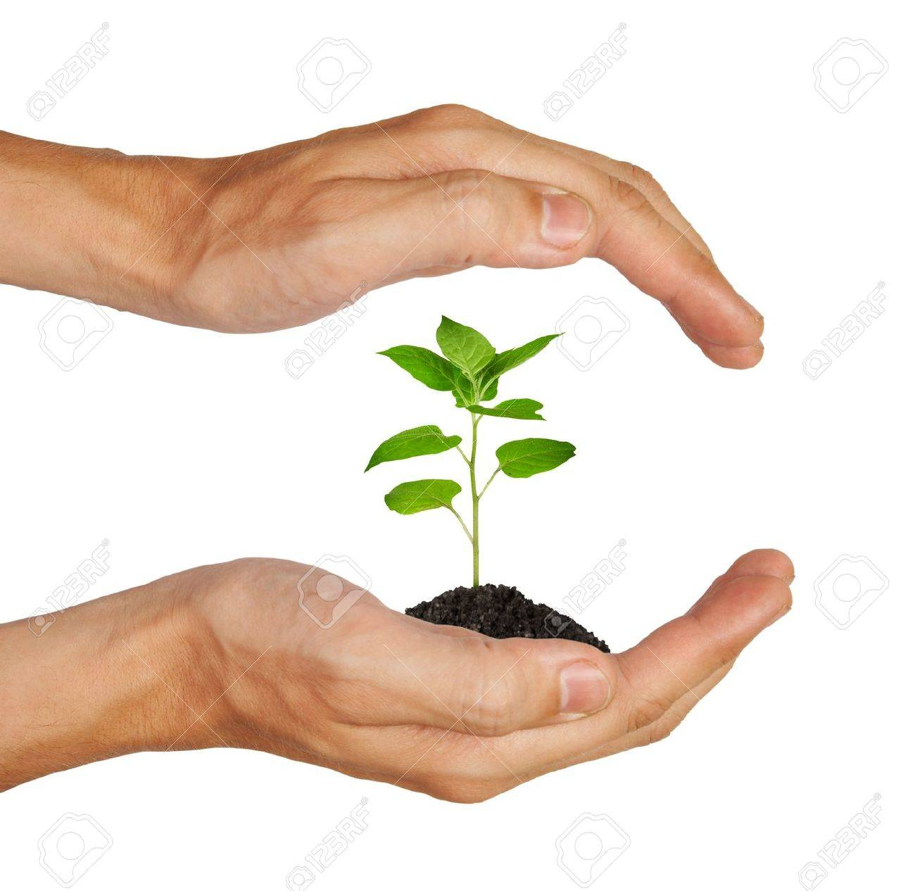 Growing green plant in a hand isolated on white background Stock Photo - 7237302