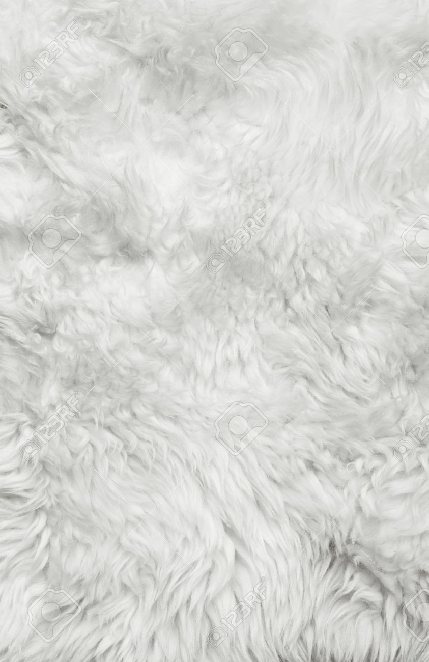 white carpet background. white fur background close up stock photo - 16049789 carpet r