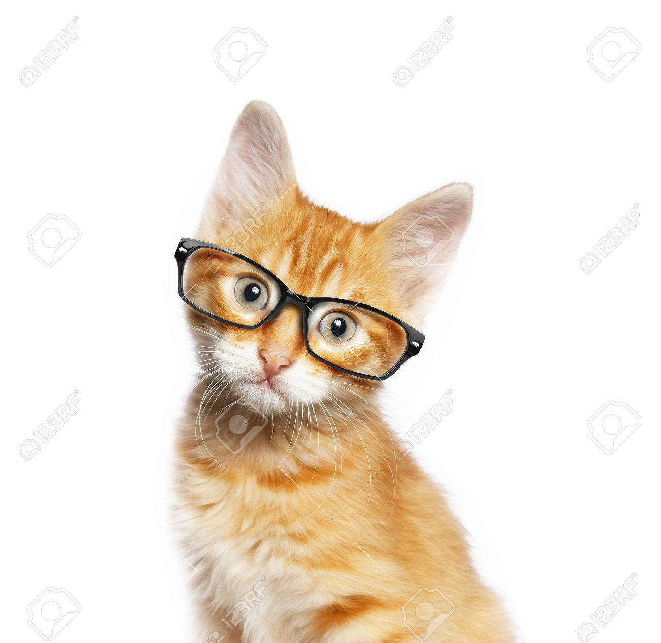 Red cat in glasses, isolated on white backgroundv - 54301197