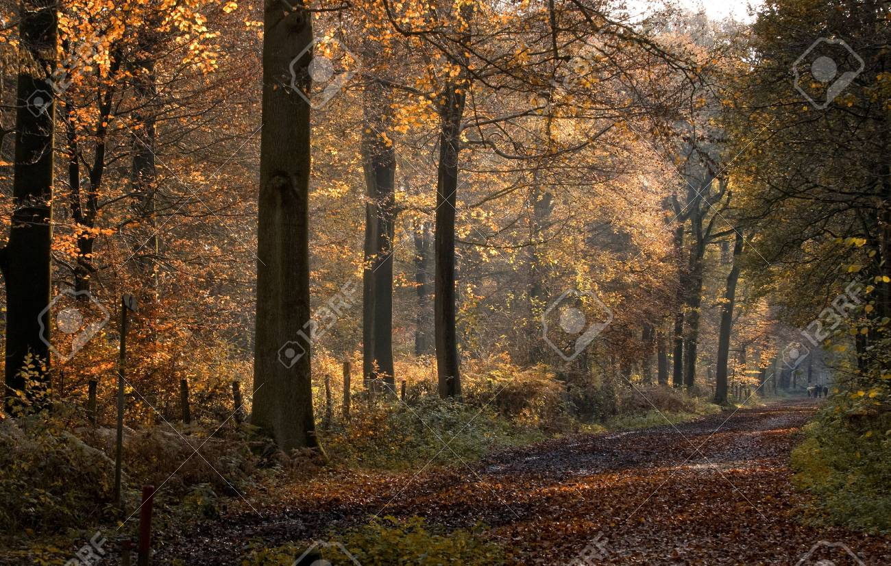 autumn forest Stock Photo - 5882528