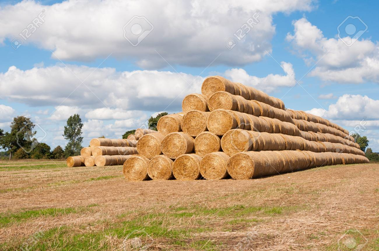 Rolled straw of big pattern with summer background Stock Photo - 15595671
