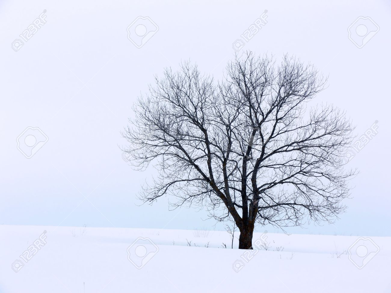 Tree on a snowy hill against a cloudy sky. Stock Photo - 417516