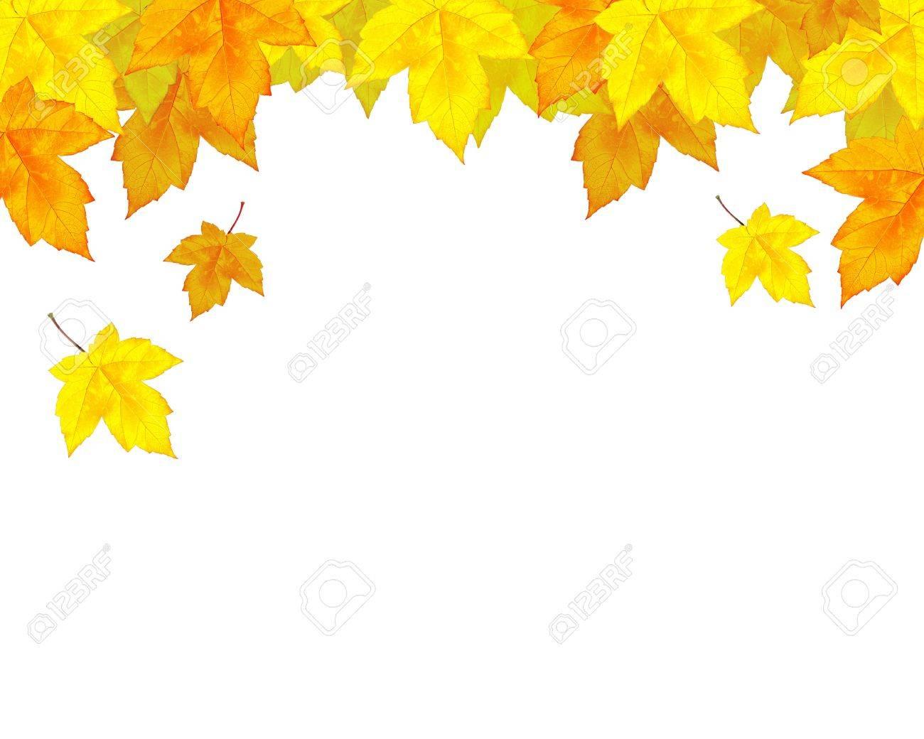 autumn leaves background Stock Photo - 7936072
