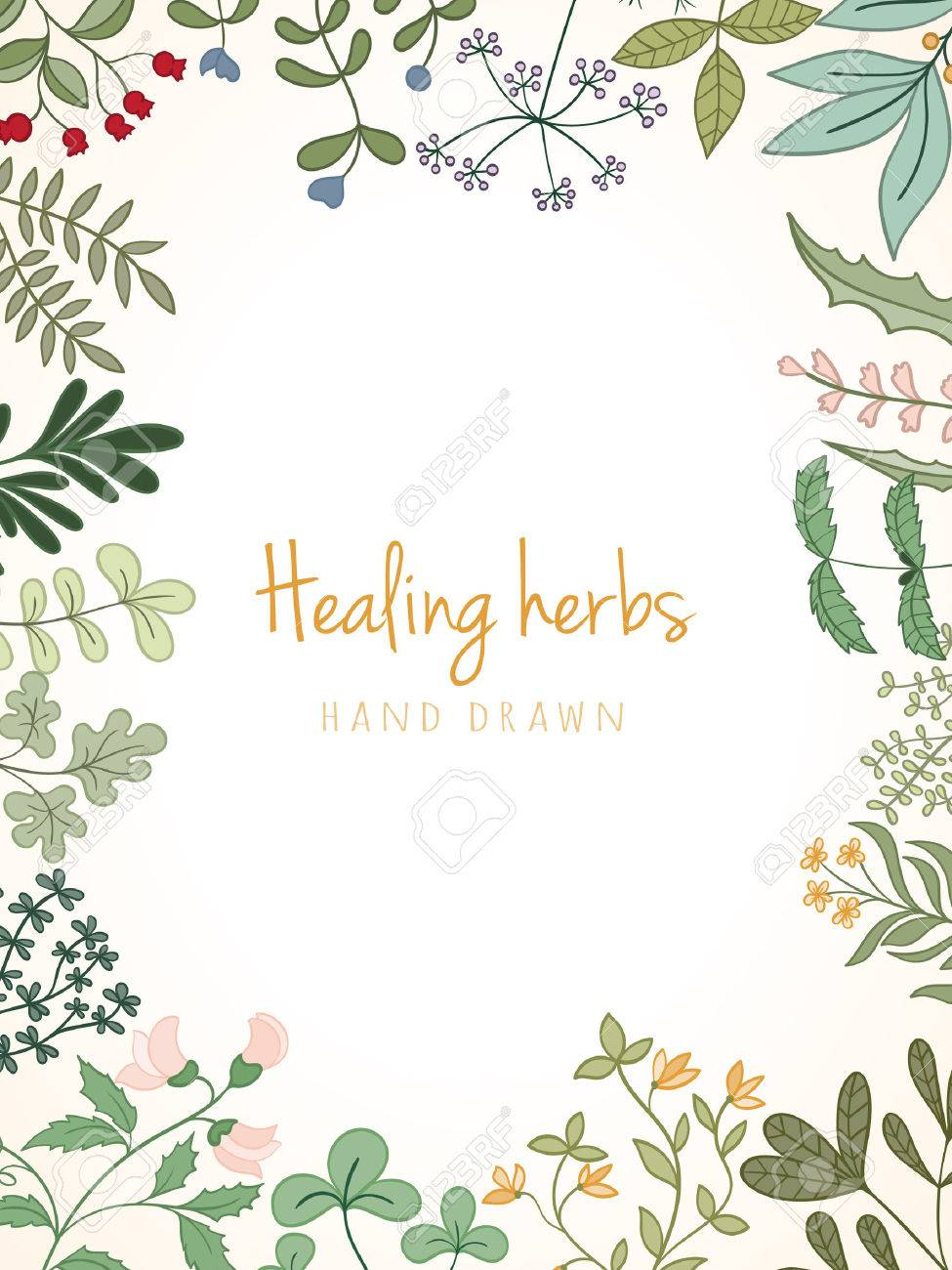 Hand drawn vintage background of medicinal organic healing herbs. Vector medical plants and herbal botanical flowerelements can be used for banner template, card, flyer, banner, sale, website - 67736386