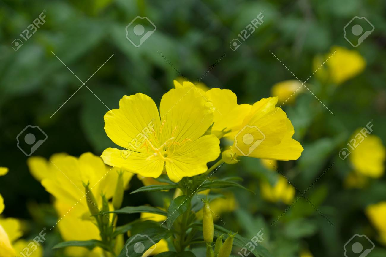 Set Of Flowers Of Yellow Color Under The Spring Sun Stock Photo