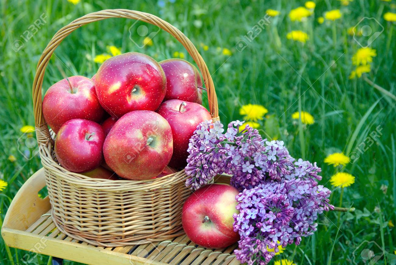 Fresh red apples in a wicker basket in the garden. Picnic on the grass. Ripe apples and spring flowers. - 123614612